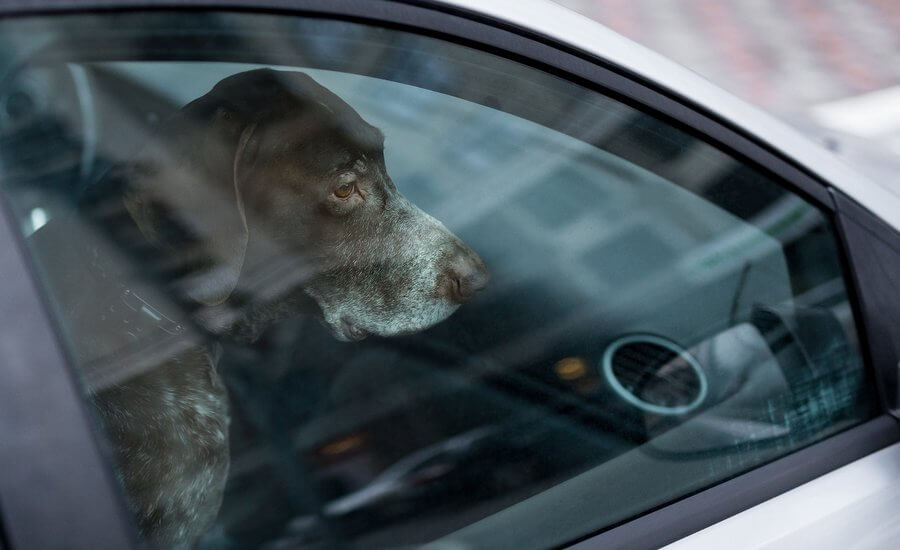 Dog left alone in hot car